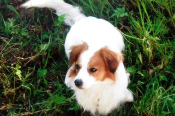 Ferien mit dem Hund in Bayern Bauernhofurlaub im Bayerischer Wald
