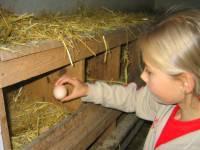 Erlebnis Bauernhof in Bayern Ferienwohnungen Bayerischer Wald