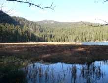 Naturdenkmal Grosser Arbersee Hochmoor