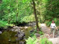 Wandern im Bayerischen Wald Wanderweg Buchberger Leite