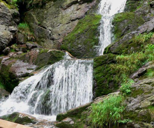 Bayern Natururlaub im Bayerischen Wald