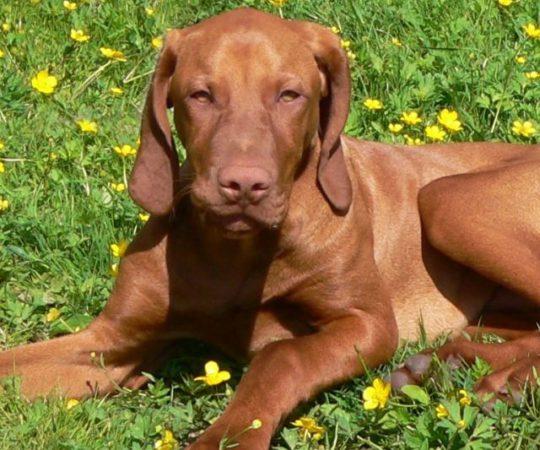 Bauernhof Urlaub mit Hund in Bayern